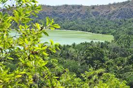 Mayotteforests.jpg